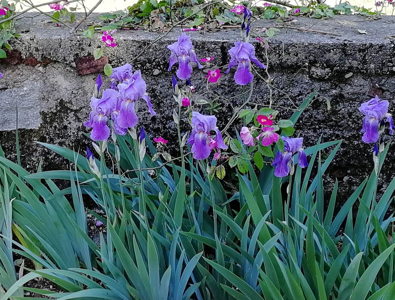 Dandelion Como - Il Parco Inglese 6